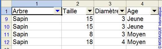 La liste, après application du filtre - Excel - MOSAIQUE Informatique - Formations informatiques et création de sites Internet - 54 - Nancy - Meurthe et Moselle - Lorraine