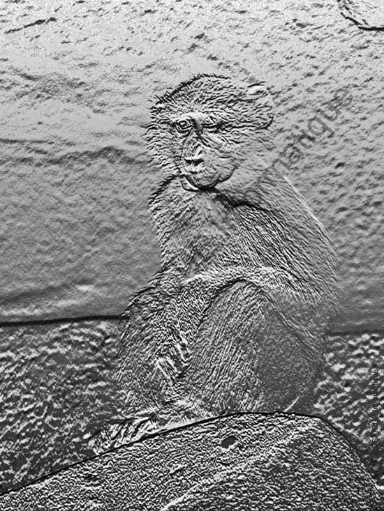 Photo numérique - L'image, après application fossilisante du filtre Bas-relief