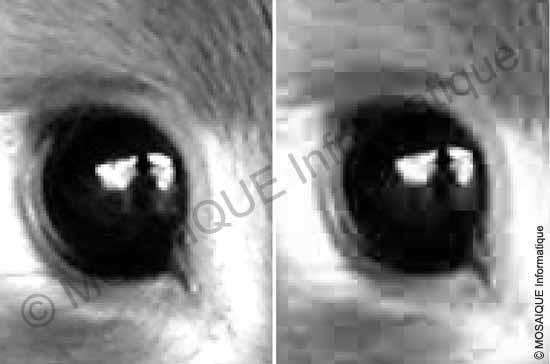 Cours sur la photo numérique -  La première photographie est enregistrée au format tiff alors que la seconde est au format jpeg, avec un fort taux de compression