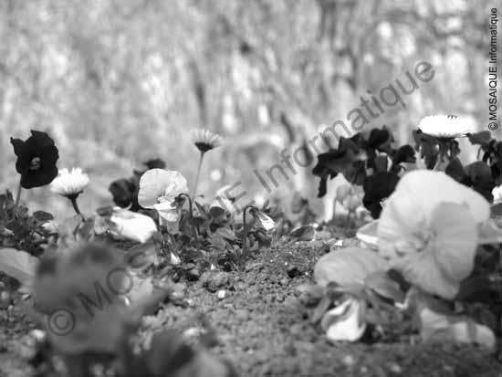 Cours photo numérique -  La mise au point est opérée sur le premier plan (les fleurs)