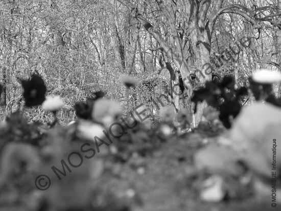 Cours photo numérique -  La mise au point est opérée sur le second plan (les arbres)
